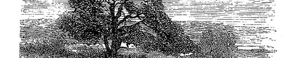 Мамврийский дуб.