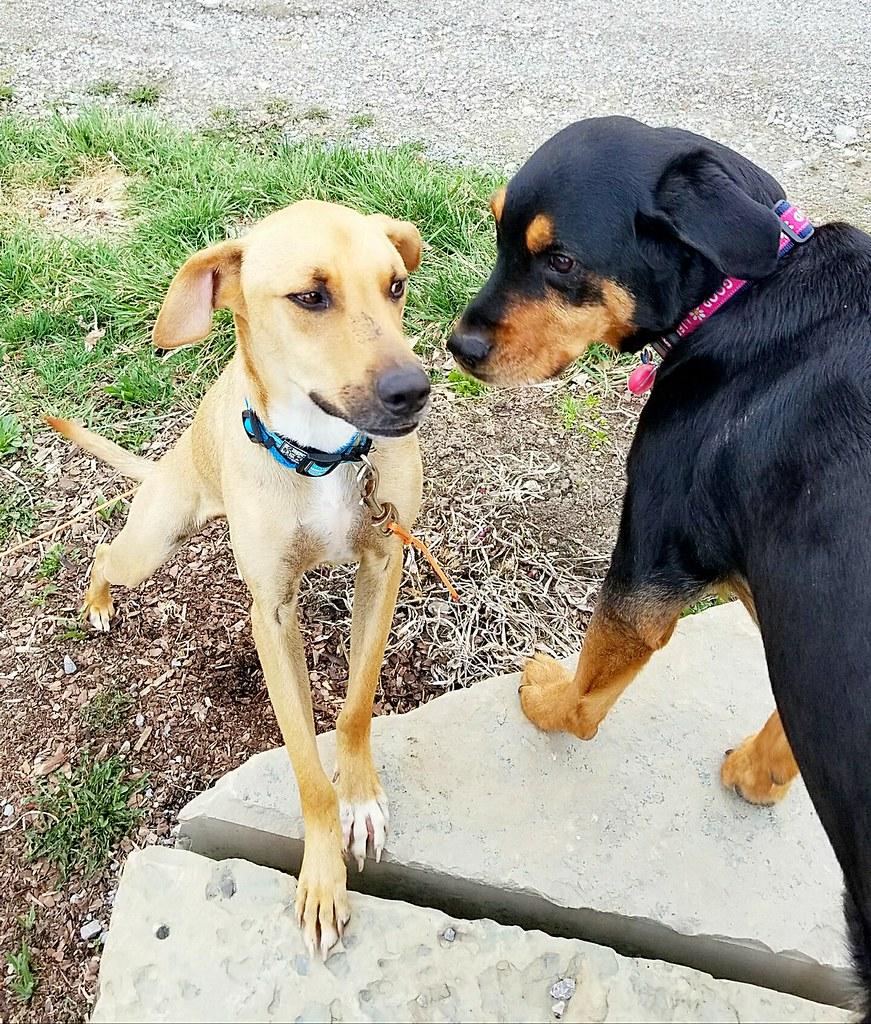 PAAWS Antigua dadli dogs