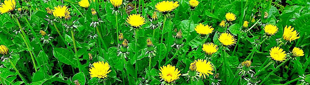Цветы продлевают жизненные силы