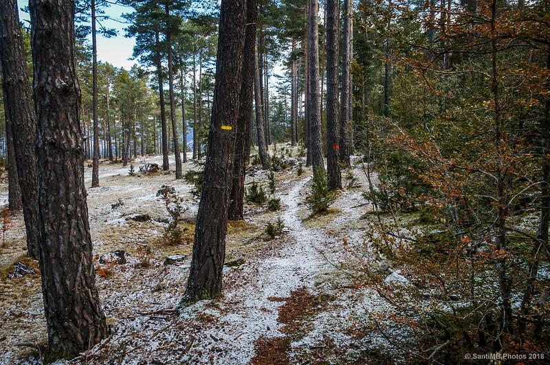 Por el sendero del Bos de Palomera