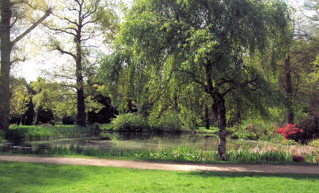 Image result for bushy park london