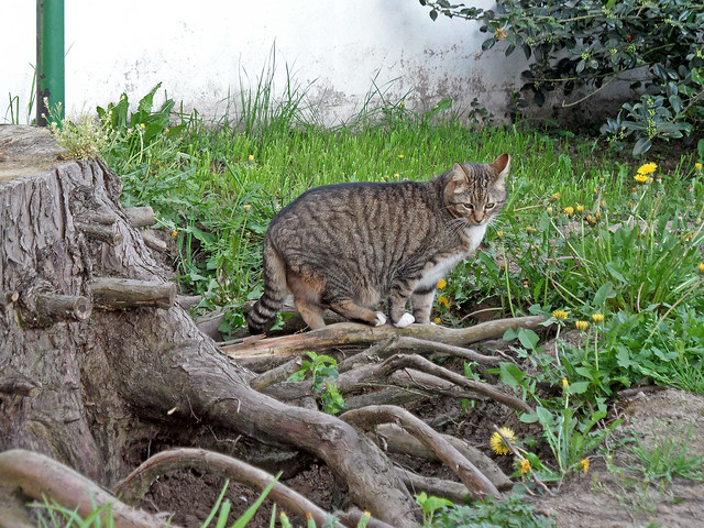 Katze auf einem Baumstumpf