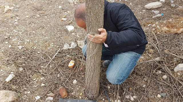 AionSur: Noticias de Sevilla, sus Comarcas y Andalucía 42283318721_984c3fbaaa_z_d Vandalismo sobre 40 árboles en La Roda de Andalucía La Roda de Andalucía