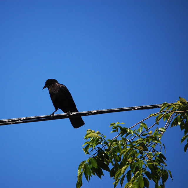 The Raven and Its Symbolism in Western Literature of the E… | Flickr
