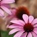 Parker Flowers