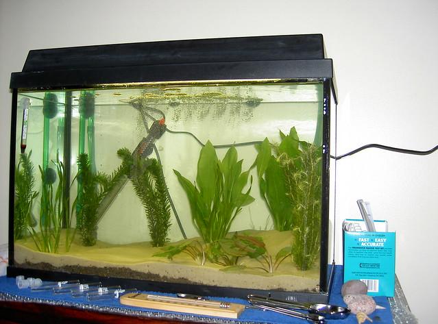 Fish tank planted flickr photo sharing for Fish tank camera