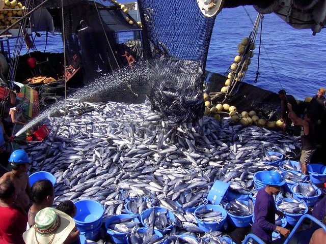 R Fisheries fish tons of fi...