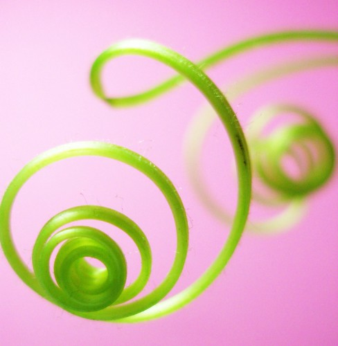 Spirals on pink | by tanakawho
