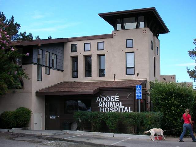 Adobe Animal Hospital Staten Island New York