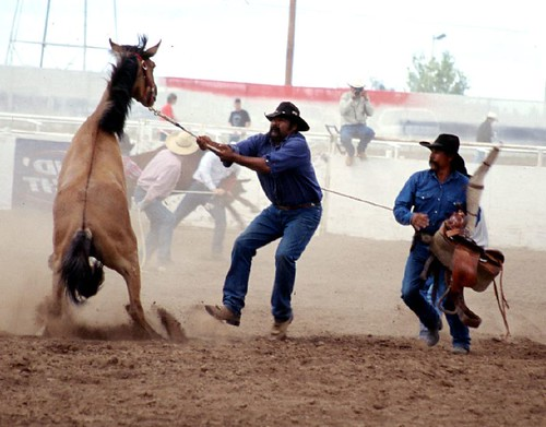 wild horse men Spectacular images taken during the rapa des bestas festival in sabucedo, in north west spain, show men grabbing and riding the wild horses as they try to trim their long manes.