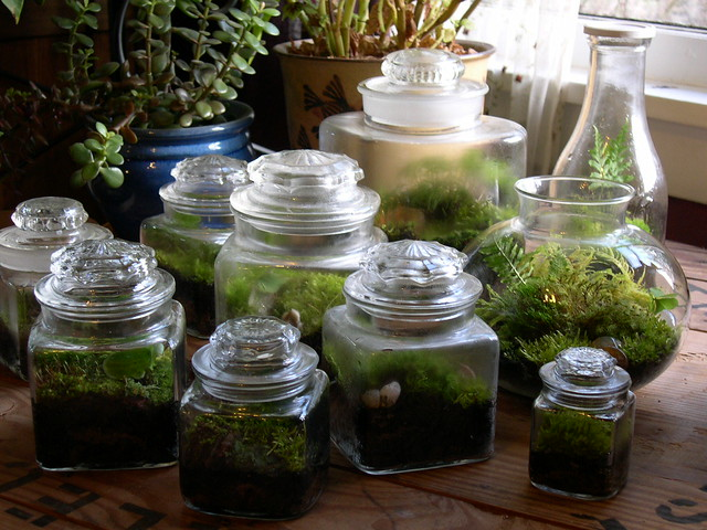 terrariums various terrariums including an old milk jug a flickr. Black Bedroom Furniture Sets. Home Design Ideas