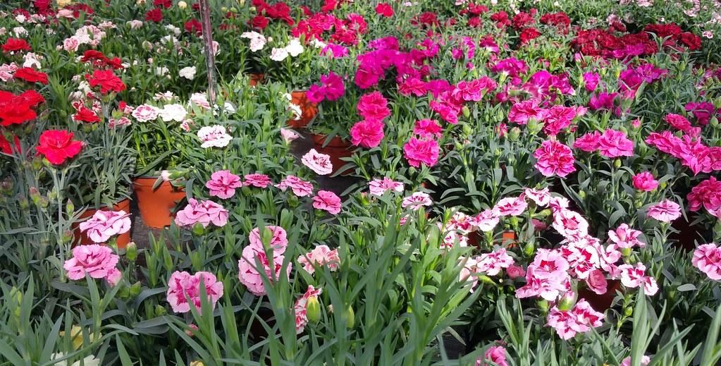 Viel buntes im Gartencenter / Many colorful in the garden … | Flickr