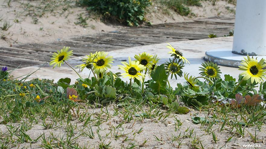 flores naturales del Saler