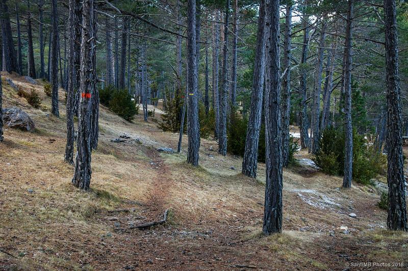 Bosc de Palomera