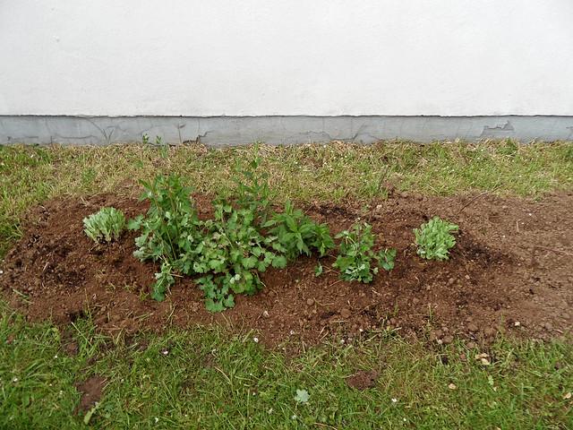 Neu angelegtes Blumenbeet mit erster spärlicher Bepflanzung