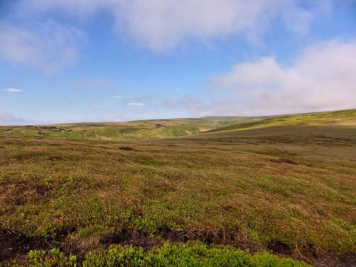 Westend Moor, looking towards Alport Moor