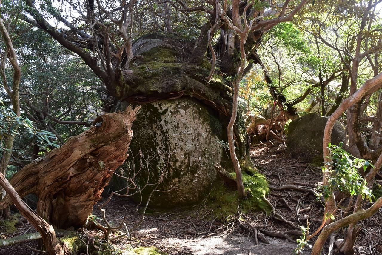 太忠岳 岩の稜線