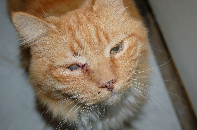 low cost cat spay los angeles