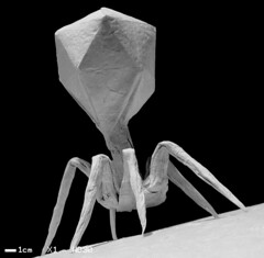 T4-bacteriophage | by origamiwolf