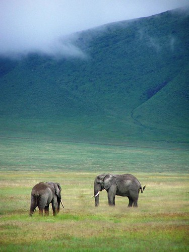 Elephants in Ngorongoro Crater | by geoftheref