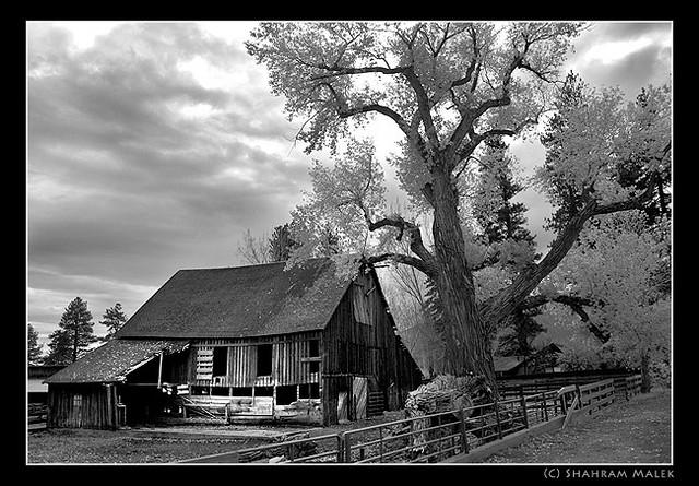 Old Barn Reno Nevada Isolation Abandoned House Black And White