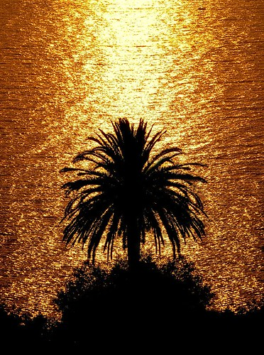 Palm at sunset | by cienne45