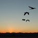 Dusk Flyback