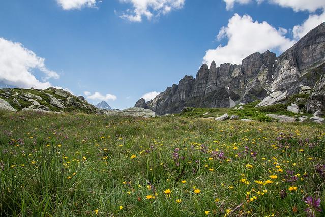 Fioriture - Parco Naturale dell'Alpe Veglia