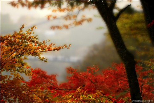 EXPLORED. Momiji 3 ~The Colors Of Fall | by ♥~ FIOHAYO ~♥