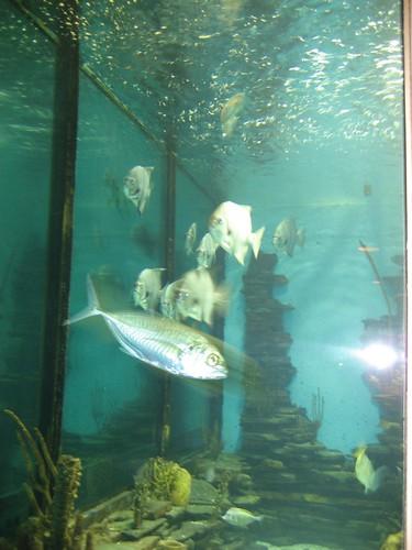 Saltwater Grill 39 S Aquarium Panama City Beach Fl 6 30