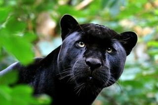 Black Jag | by sparky2000