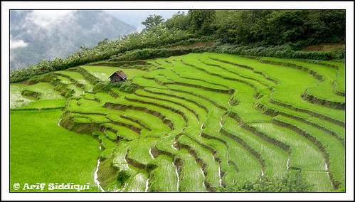 Terrace cultivation ukhrul manipur arif siddiqui flickr for Terrace cultivation
