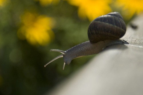 Snail | by voorhorst