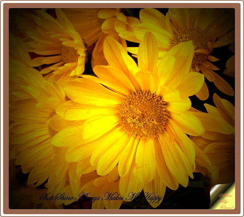 SunShine Always Makes  Me  Happy | by Tumbleweed Photography~Carol~
