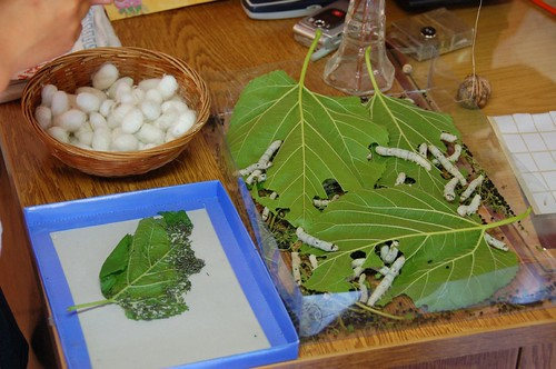 how to get rid of leaf eating worms