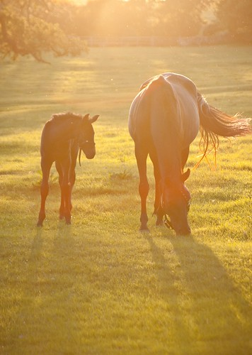 Mare and Colt, backlit | by J e n s