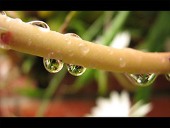 Gotitas / Droplets | by rvsv - Rodolfo