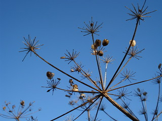 Wildflower seedheads in autumn | by allispossible.org.uk