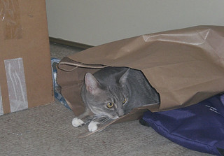 Nimbus in a bag | by cox-on-the-box - art, clay, cats, veg