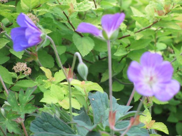 Fiori Viola Immagini.Fiori Viola Ruth Selamawit Flickr