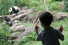 connecting with giant pandas | by woodleywonderworks