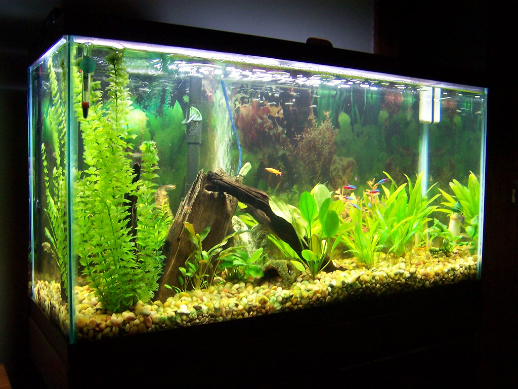 Freshwater fish aquarium accessories -  38 Gallon Freshwater Aquarium By Southsideandy