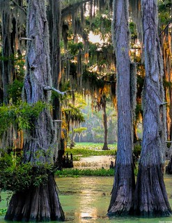 Caddo Lake, Texas | by dave_hensley