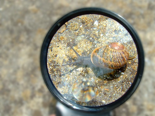 escargot / snail | by OliBac