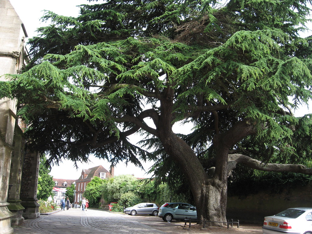 Image result for picture of the tree from a monster calls