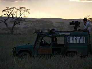 - The professionals in Serengeti | by spartan_puma