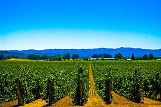Robert Young Vineyards | by star5112