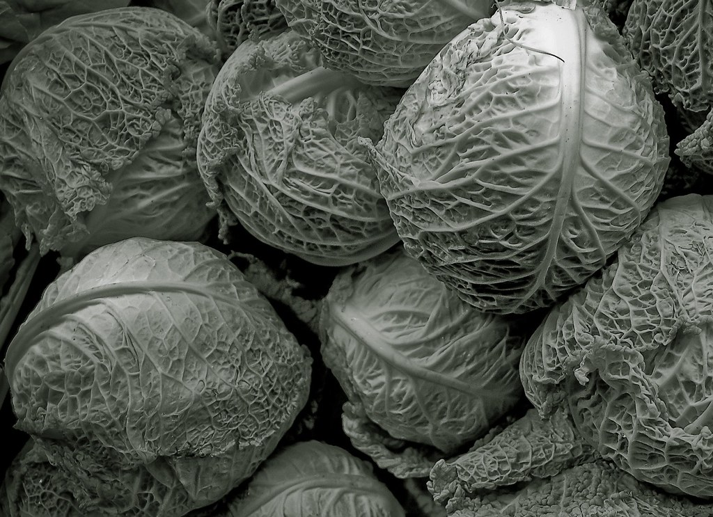 Cabbage (or Invasion Of The Body Snatchers) | by Bob Jagendorf
