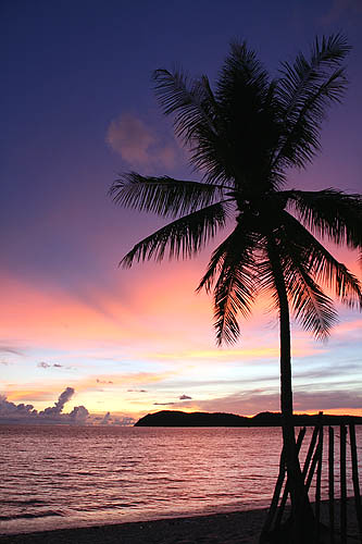 Palm Tree 1 Langkawi Tengah Beach Sunset Malaysia