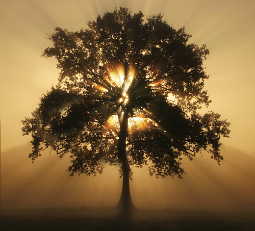 Attractive ... Tree Of Light | By Ms Ladyred Design